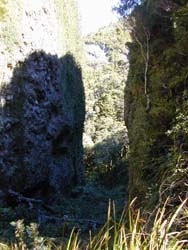 Great Barrier Island Windy Canyon